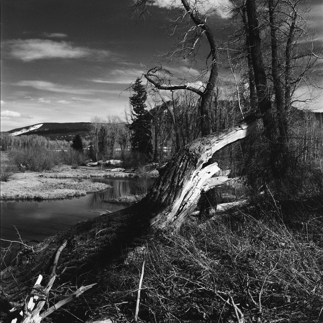 A fallen tree. In the background, a pond.