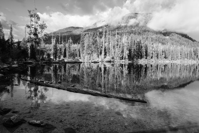 The shores of Taggart Lake.