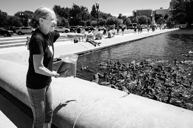 A woman feeding the ducks at the Capitol Reflecting Pool.