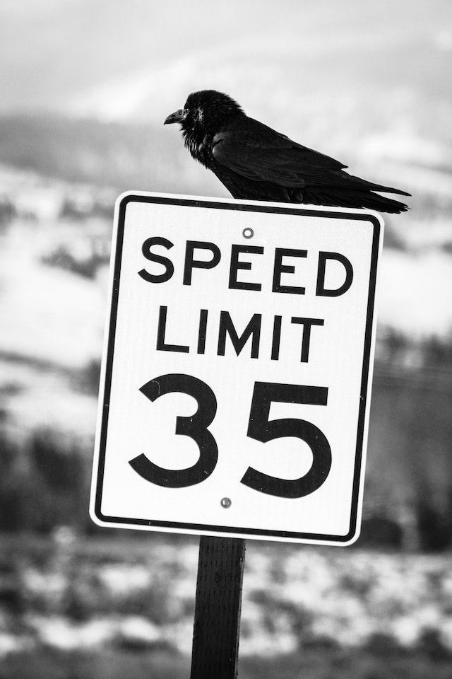 A raven sitting on a speed limit sign.