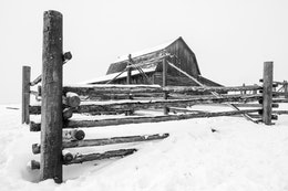 The back of the John Moulton barn at Mormon Row during a snowstorm, with its fence partially covered in snow.