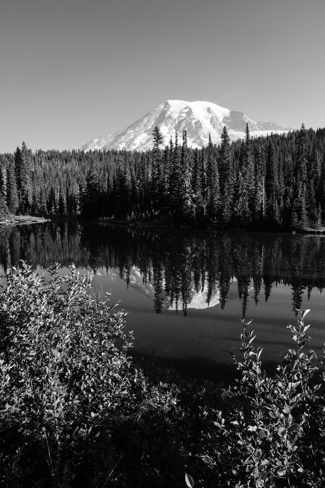 Mount Rainier, reflected off the surface of the Reflection Lakes, with some bushes in the foreground.