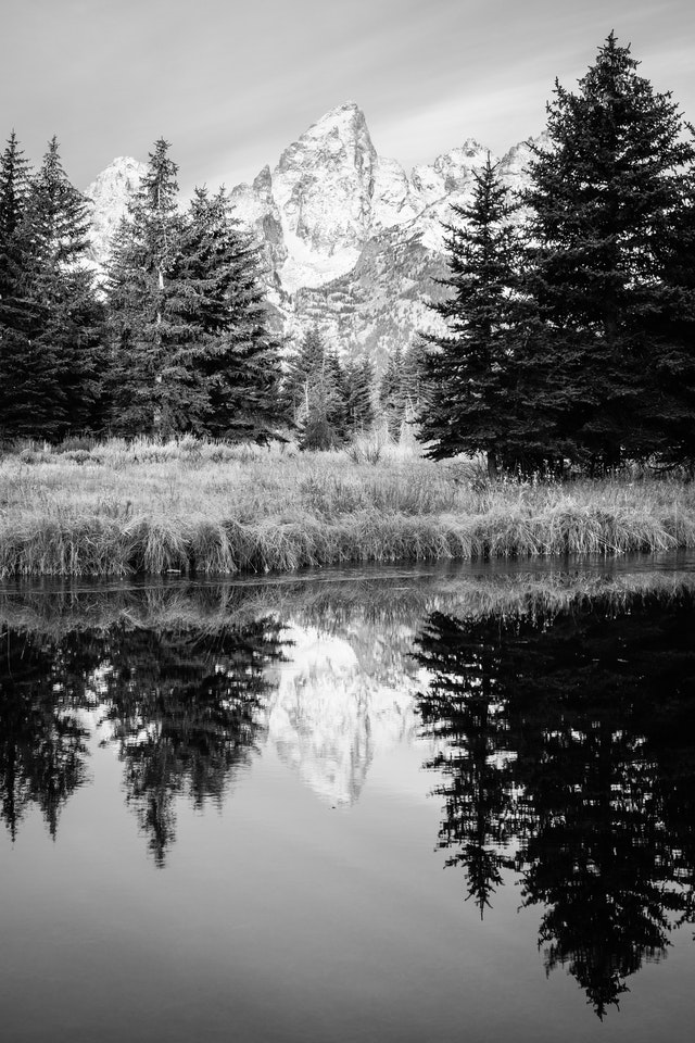 Grand Teton, seen between trees and reflected in the water at Schwabacher Landing.