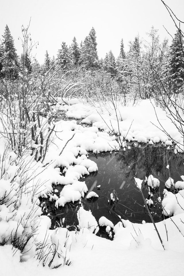 A pond in a forest, surrounded by snow.