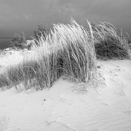 Dune grass on a sand dune at Sleeping Bear Dunes National Lakeshore, on a stormy day. In the background, South Manitou Island and a distant storm.