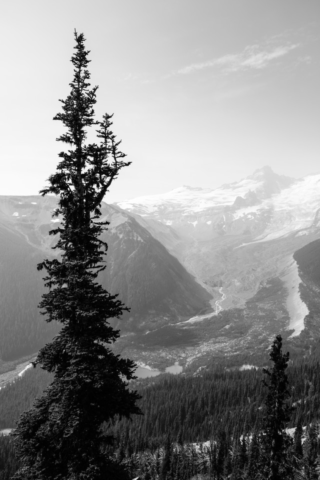 The White River, seen from the Glacier Overlook near Sunrise, in Mount Rainier National Park.