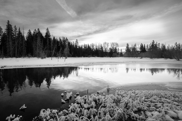 A pond in Grand Teton National Park, at dawn. In the foreground, frozen reeds.
