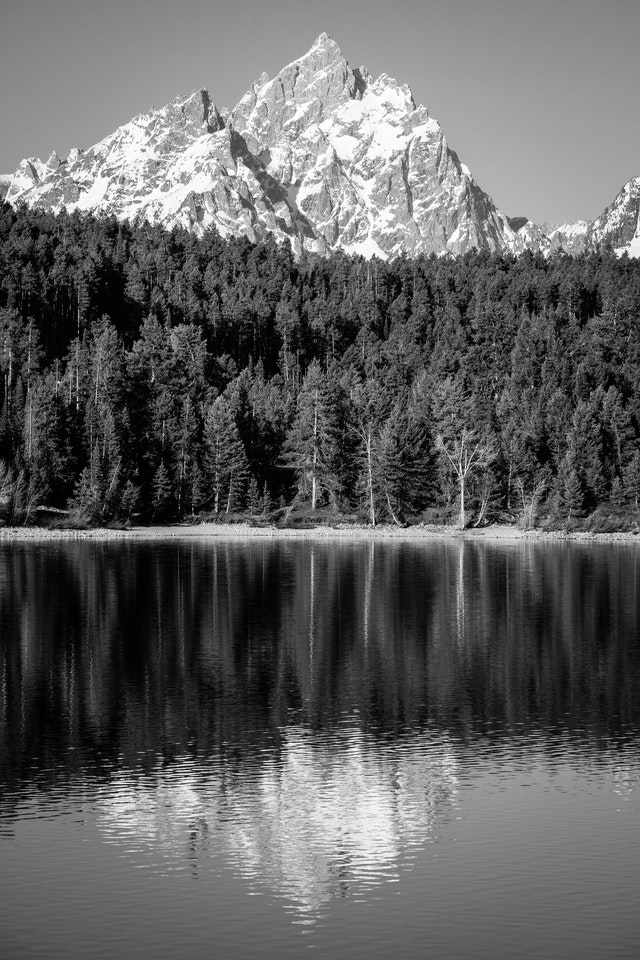 Grand Teton and Teewinot Mountain, seen behind the woods near Jackson Lake and reflected off the surface of the lake.