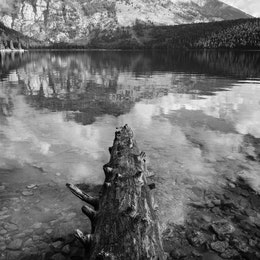 A fallen tree jutting into Phelps Lake, with Death Canyon in the background.
