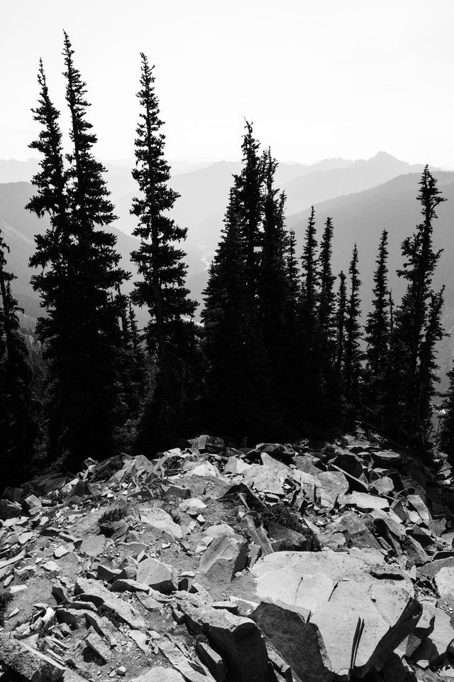The silhouettes of trees against the haze seen from the Glacier Overlook near Sunrise, with some jagged rocks in the foreground.