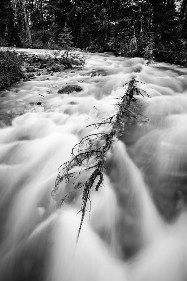 A long exposure photograph of Granite Creek, flowing around a small pine tree and a fallen tree.