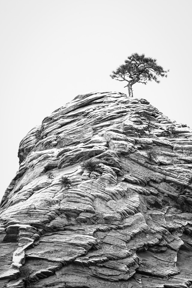 A small pinyon pine tree growing on a snow-covered sandstone hoodoo.