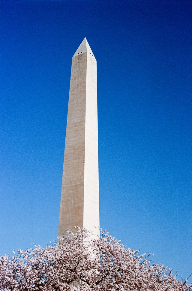 The Washington Monument during the Cherry Blossom Festival.