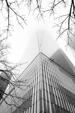 Looking up at the World Trade Center, disappearing into the clouds, between tree branches.