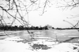 The Jefferson Memorial, seen through the branches of a cherry tree, across the frozen Tidal Basin.