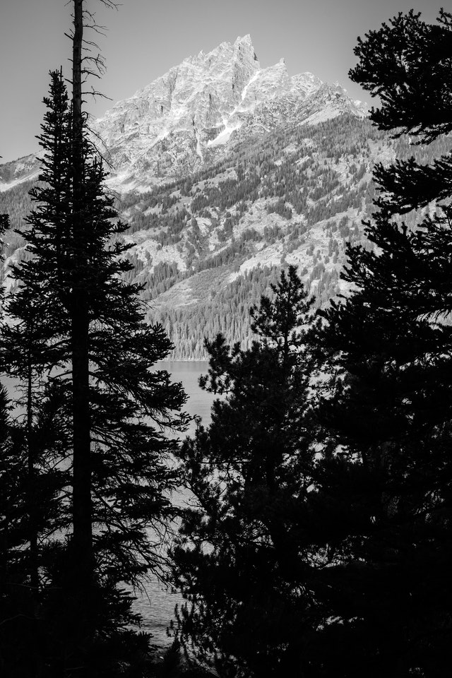 Teewinot Mountain framed by pine trees on the shore of Jenny Lake.
