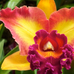 An orchid, at the Phipps Conservatory & Botanical Gardens, in Pittsburgh.