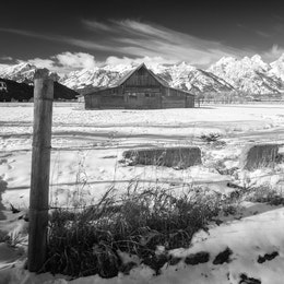 The T.A. Moulton Barn behind a wire fence at Mormon Row.