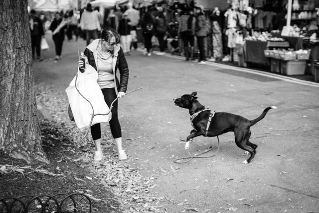 A dog chasing a stick at the Eastern Market Flea Market.