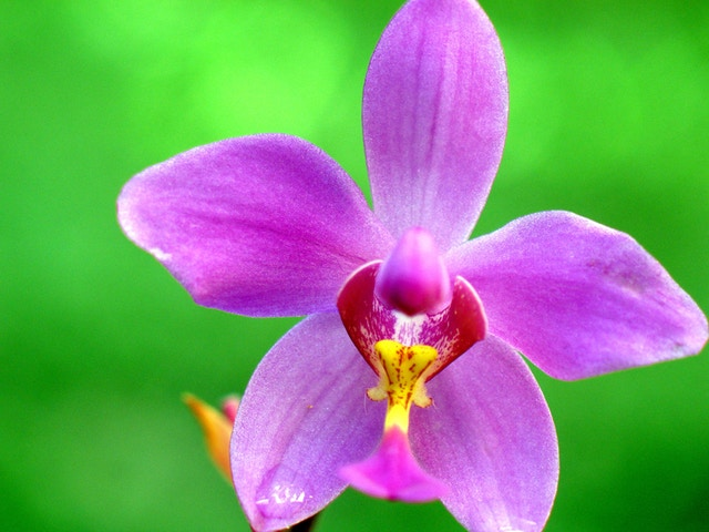 Macro of a teeny tiny orchid, maybe about an inch wide.