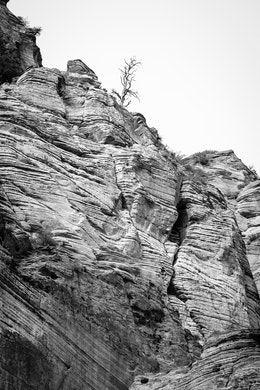 A bare tree seen at the top of a rock wall in Zion. The rock of the wall is streaked with horizontal lines.