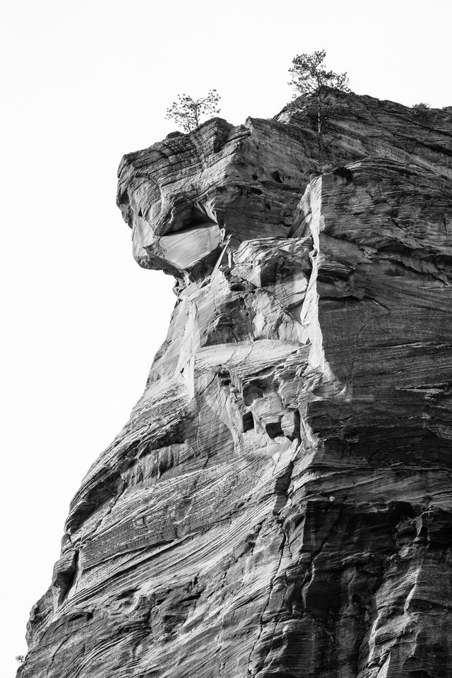 A rocky cliff at the top of the Touchstone Wall in Zion National Park. Two small trees are growing at the top.