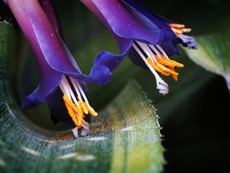 Macro of the inflorescence of a bromeliad.