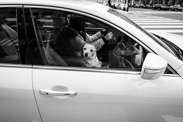 A dog looking out the passenger side window of a car turning a corner in downtown DC.