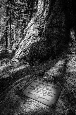 Plaque to the Unknown Dead of the World War at Mariposa Grove, Yosemite National Park.