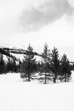 A copse of trees at the Taggart Lake Trailhead in Grand Teton National Park.