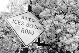 "A ""bridge ices before road"" sign surrounded by cherry blossoms."
