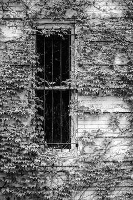 A vine covered facade of a house in Capitol Hill.