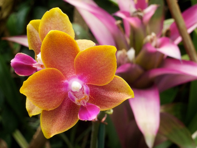 An orchid, at the Phipps Conservatory & Botanical Gardens, in Pittsburgh, PA.