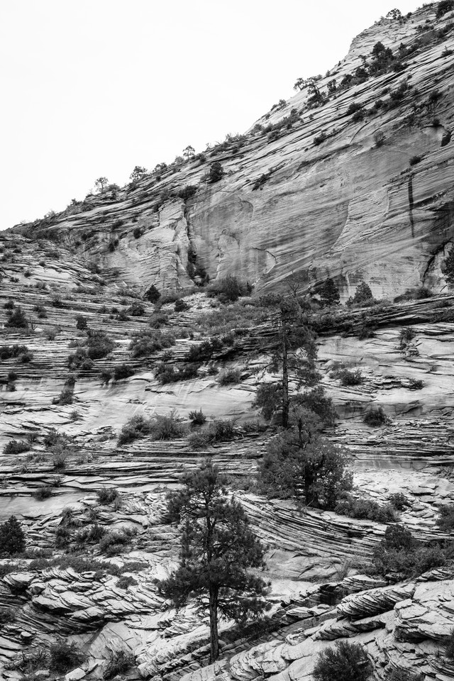 Trees and brushes growing out of a sandstone hillside near the Zion-Mount Carmel Highway.