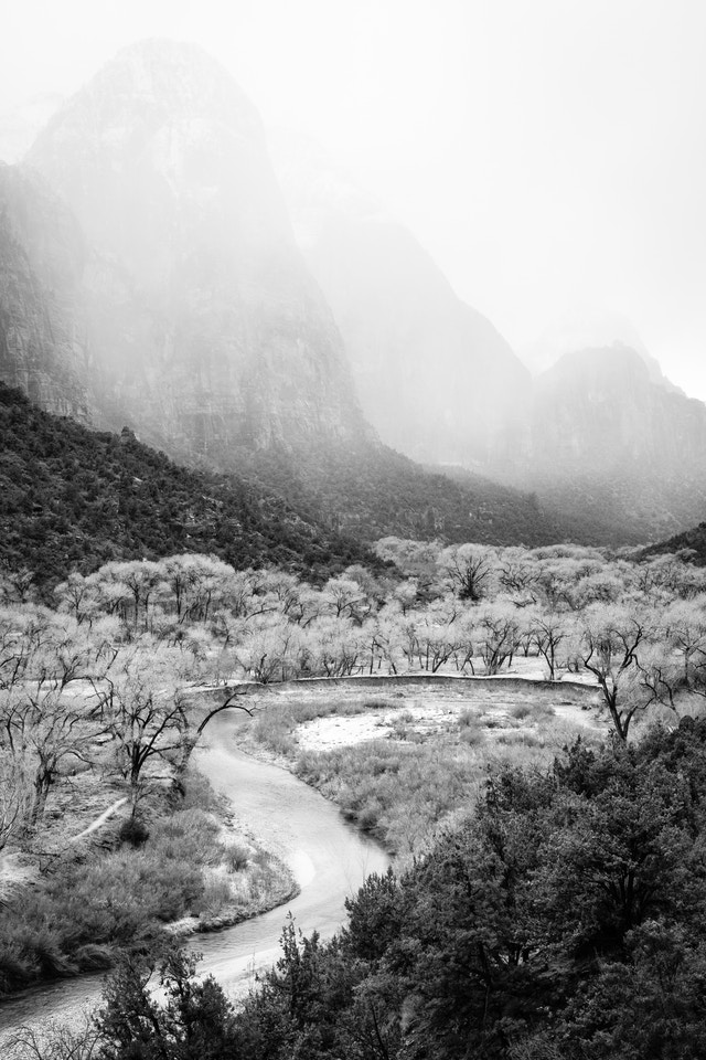 The valley floor of Zion National Park. In the foreground, bare cottonwood trees next to the Virgin River can be seen; in the background, the Mountain of the Sun, partially enveloped by an incoming snow storm.