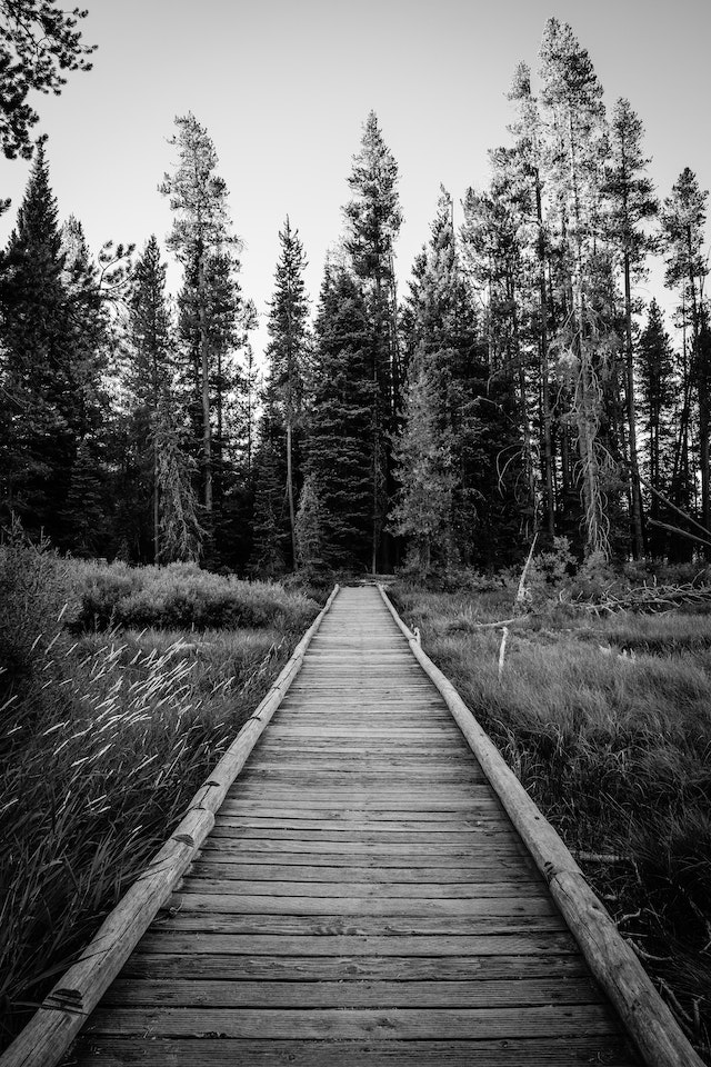A wooden bridge through the woods near String Lake.