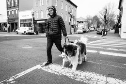 A man crossing M street in Georgetown while walking a bunch of dogs.