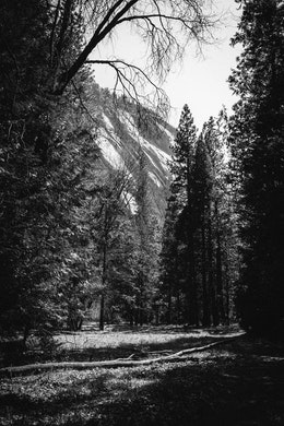 Trees at Yosemite Valley.