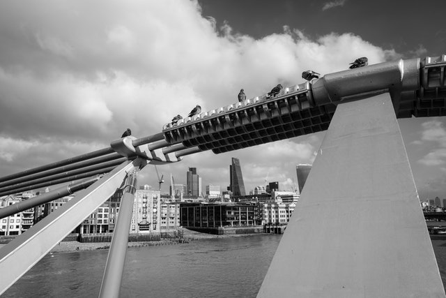 Pigeons resting on the cables of the Millennium Bridge in London.