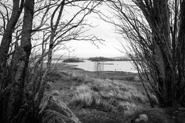 Loch Bà, seen through trees, on Rannoch Moor.