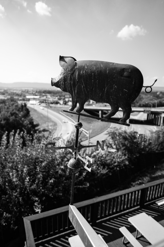 A weather vane shaped like a pig, at Sugar's Ribs in Chattanooga.