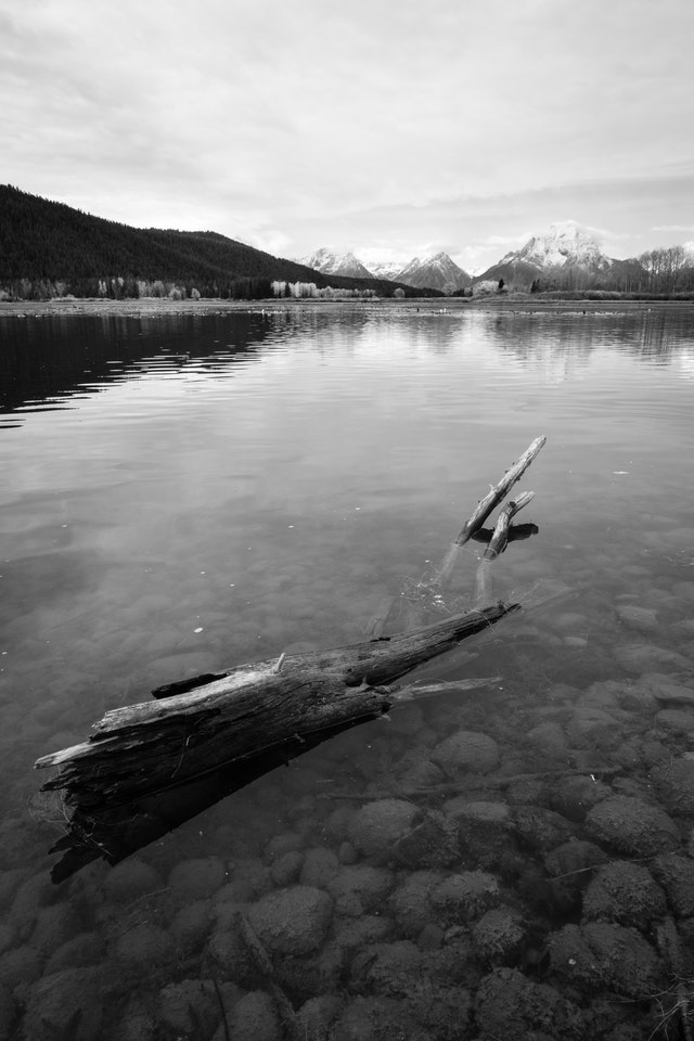 A log in the water at Oxbow Bend, Grand Teton National Park.