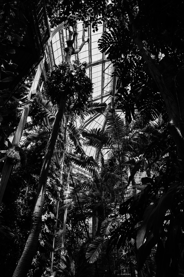 Looking up in the United States Botanic Garden.