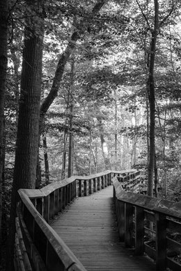 The trail boardwalk near Brandywine Falls at Cuyahoga Valley National Park in Ohio.