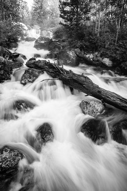 Water rushing through rocks and a fallen log at Taggart Creek.