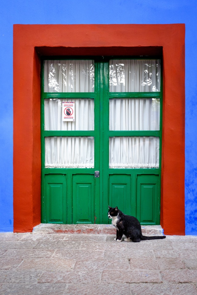 A black and white cat in front of a door at the Frida Kahlo Museum in Coyoacán.