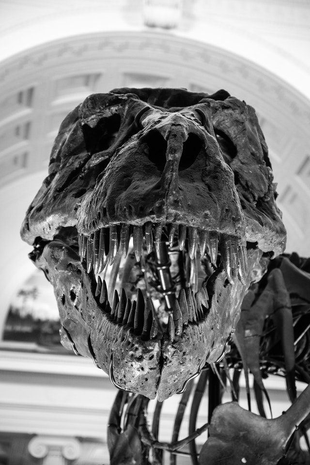 Sue, the T-Rex, at the Field Museum in Chicago.