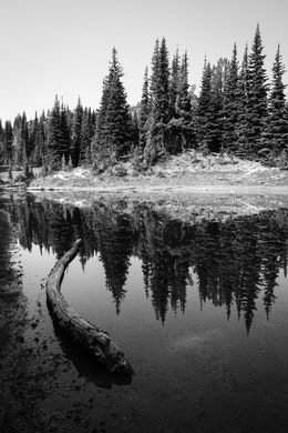 A log on the shore of Shadow Lake, with trees reflected off its surface.