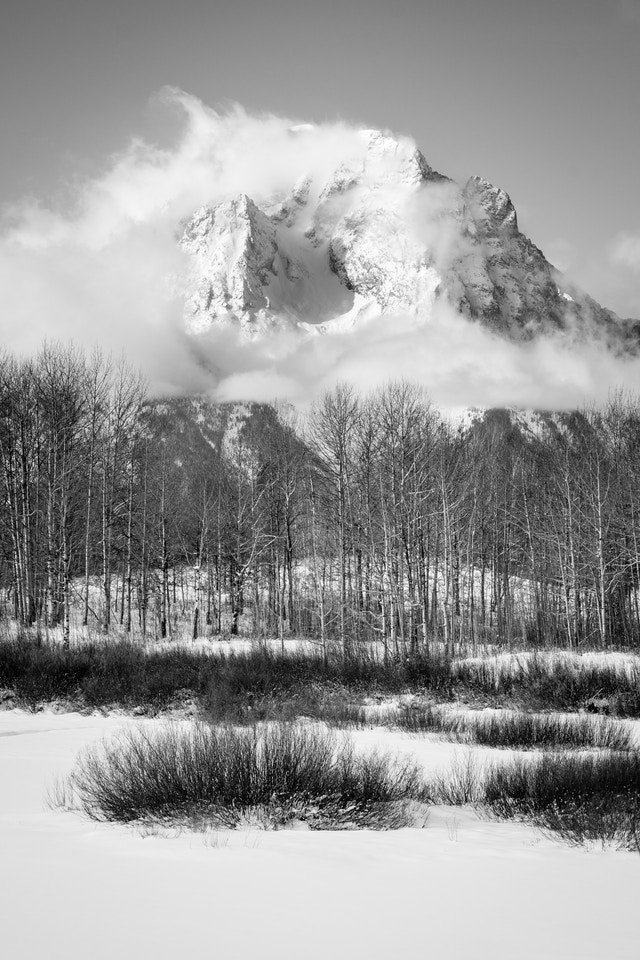 Mount Moran shrouded in clouds behind a line of aspen trees at Oxbow Bend.