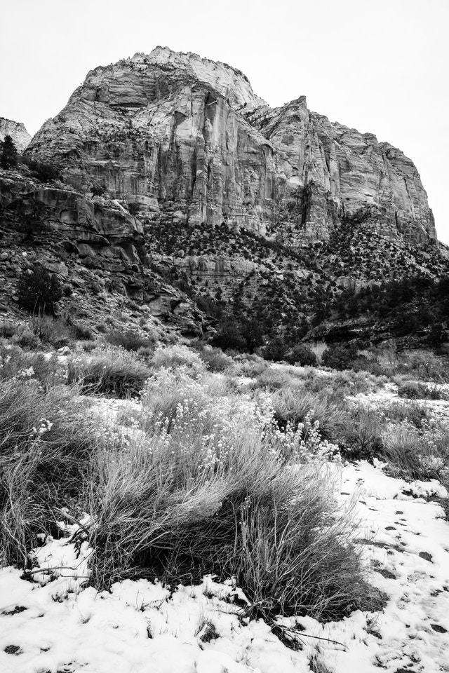 The East Temple, seen from the Zion-Mount Carmel Highway. In the foreground, snow-covered brush.
